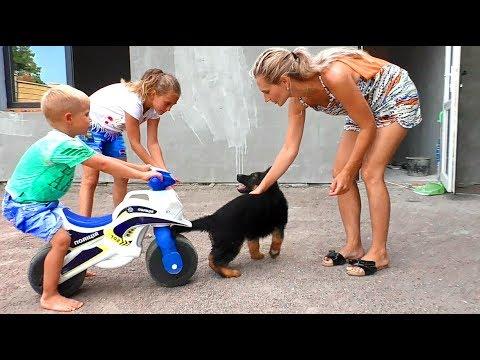 В семье появился ЩЕНОК Немецкой овчарки. The family has a German Shepherd puppy.