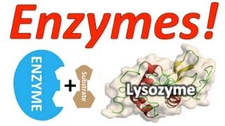 Enzymes: Mr. W