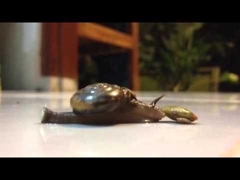 Snail! Time Lapse