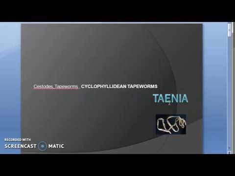 Parasitology 138 A Taenia Saginata Solium Beef Tapeworm Pork Cysticercosis Cysticercus Pig