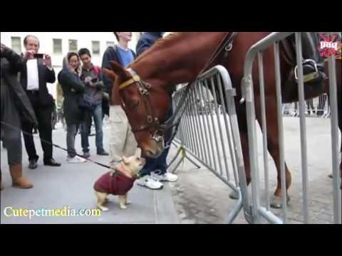 смешные приколы с лошадьми