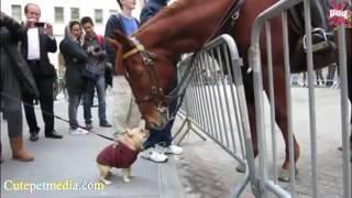 Смешные лошади видео приколы!