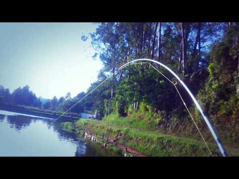 Dicas de iscas para Pirarara - Pesqueiro Montenegro
