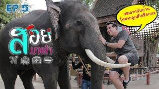 ช้างไทย - สอยมาเล่า l EP.5