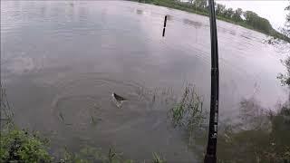 büyük yayin baligi karabalik avi 2 büyük balik