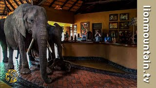The Elephants that came to dinner | Mfuwe Lodge, Zambia thumbnail