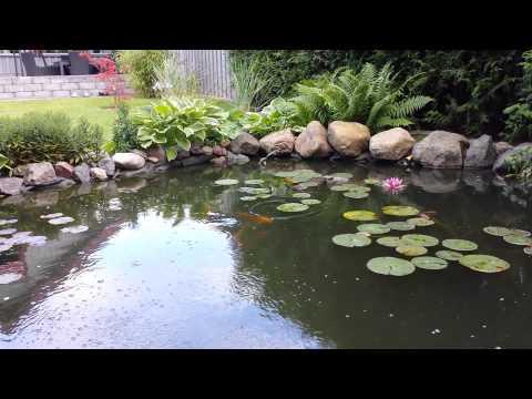 Trädgård trädgård damm : Roger Holmgren trädgÃ¥rdsdamm med koi 3 - YouTube