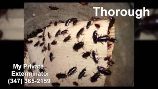 My Private Exterminator     (347) 365-2159