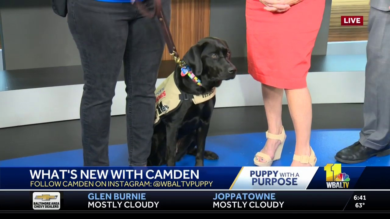 Camden - WBAL-TV NBC Baltimore Puppy
