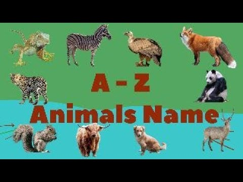 Download A- Z Animals Name | Animals name for kids | ABC Animals vocabulary for kids  @kiddie sign-in