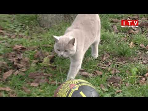 ITV media group: На Рівненщині через скаженого кота оголосили двотижневий карантин