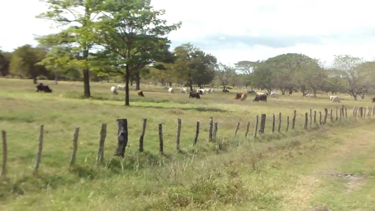 Venta de finca en nandaime nicaragua youtube - Fincas para celebraciones en telde ...