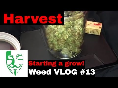 Micro grow Autoflower harvest and starting a grow Weed VLOG #13