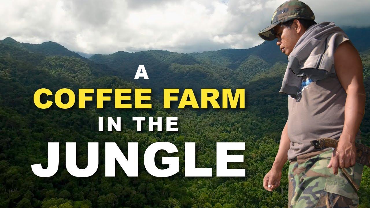 The Future of Coffee Farming