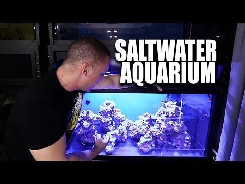 Saltwater aquarium setup - The scape