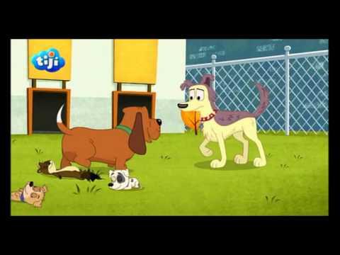Les Puppies L'agence Canine - C'est comme ça qu'un chien est heureux