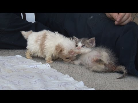 Thumbnail for Cat Video Cutest Rescue Puppy and Kitten Are Best Friends