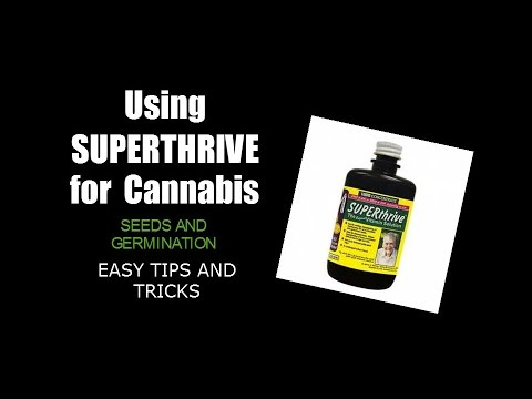 Superthrive for cannabis - Easy seed / germination tips tricks