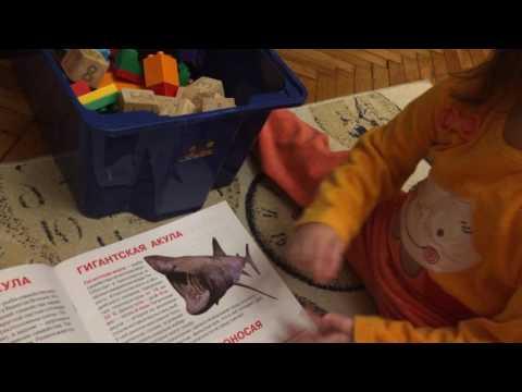 Амира (2,4 года) называет виды акул
