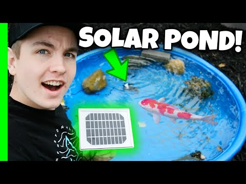 Solar Powered Backyard Fish Pond! (Pump Filter Testing)