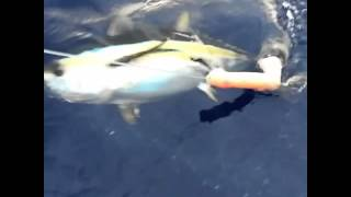 Dildo fishing, fishing at its best