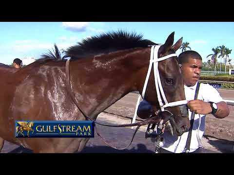 Gulfstream Park Replay Show | December 28, 2017