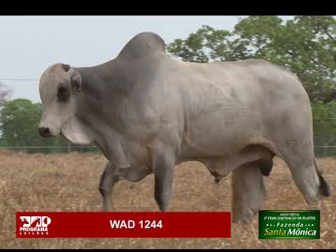 LOTE 07 - WAD 1244