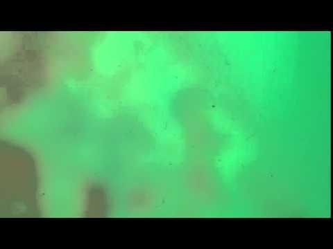 IREKAJAYA: Ship Inspections 03