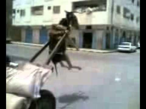 Esel lacht sich tot