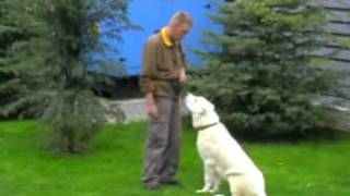 Clicker Obedience training.(Central Asian Shepherd Dog)