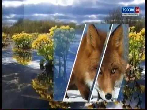 Из рук в руки домашние животные в москве. Басенджи продажа щенков и взрослых собак в москве. Частные объявления с фото. Басенджи в москве: купить или взять в дар. Подай объявление в своём городе.