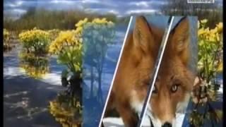 Басенджи - африканская нелающая собака. Россия 24  08.04.17
