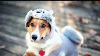 где можно купить одежду для собак недорого