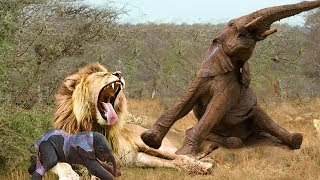 Lion Attack Baby Elephant Lost From Herd Fortunately Mother Elephants Was Promptly To Rescue