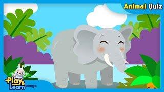 Elephant nursery rhymes | jjoy song - animal quiz song #14