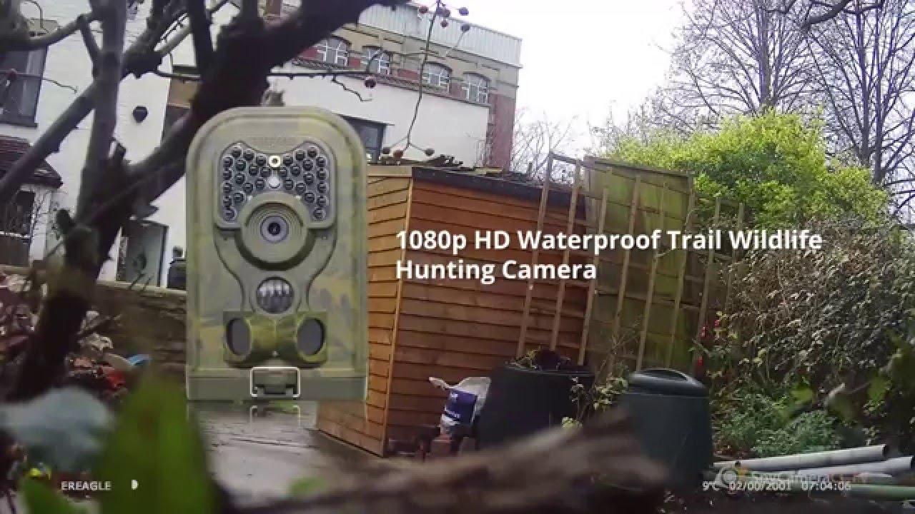 1080p hd waterproof trail wildlife hunting camera sample footage