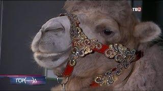 В Москве назвали победителей фестиваля циркового искусства И