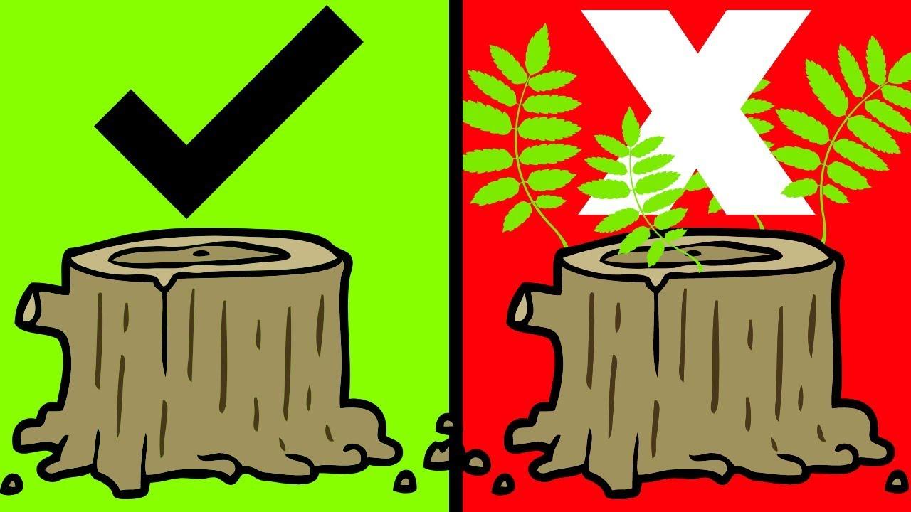 How To Kill A Tree Stump The Best Way Youtube