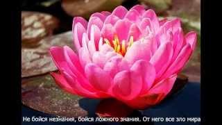 Л.Н.Толстой. Цитаты