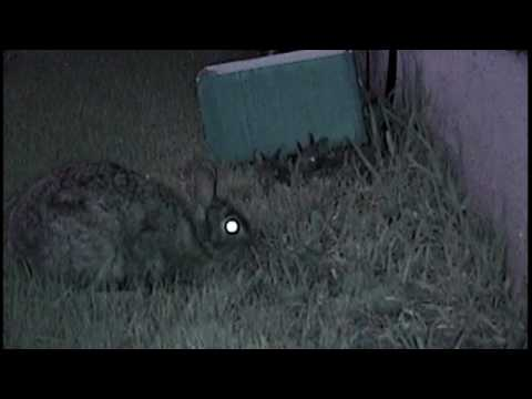 Baby Bunnies Leave Nest - Stay Safe Bunnies