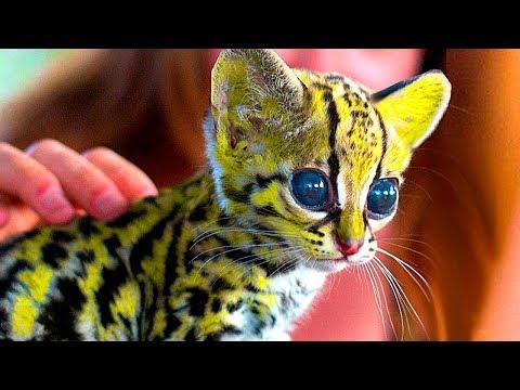 Вопрос: Какие породы кошек существуют на 2020 год?