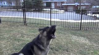 Gsd Reacts To Words