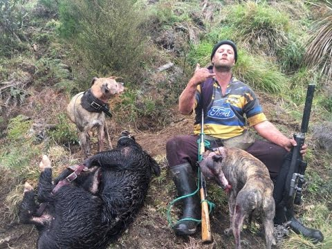2 Big Boars in one day! Winter pig hunting New Zealand 2016 With Total Safari New Zealand
