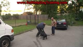 Pitbull Attack Training (k9-1.com)