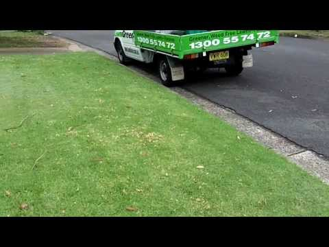Queensland Blue Couch Kikuyu Lawn Care What Grass Is That Buffalo Lawn St26