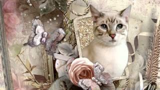 Поздравление от кошки с днем рождения
