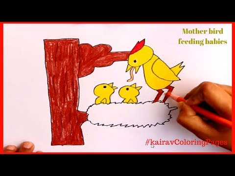 How to draw mother bird and baby birds | bird nest | KairavColorignPages