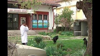 Prihvatilište za smeštaj pasa lutalica u Bogatiću - Reportaža thumbnail