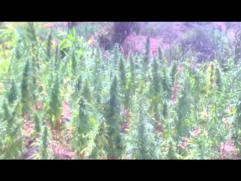 Marijuana  fields in the Rif mountains,  Morocco