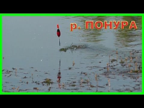 Рыбалка на реке Понура. Ловля на поплавок. Подводная съемка